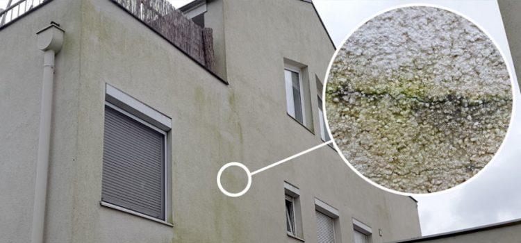 odstránenie rias, Odstránenie rias z fasády je novodobý problém tejto doby, Čistíme Fasády, Čistíme Fasády